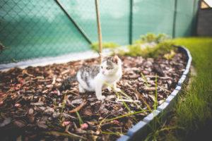 夏目漱石,吾輩は猫である,坊ちゃん,cat